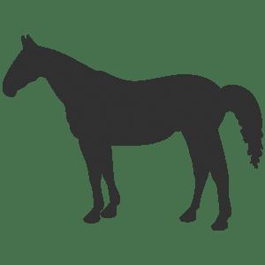 Horse Icon - CMD